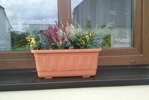 Výzdoba, dům - zahrada