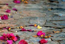 !!!!!!!!!!!  floral  !!!!!!!!!!! / by Eliete Catraio Catraio