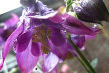 bloemen / genieten van alles wat bloeit