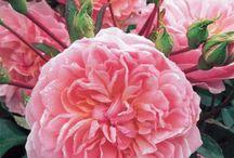 Flowers / by Joanie Seeley