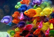 fishies!!!!!! :P