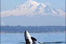 Things we love about the Pacific NW