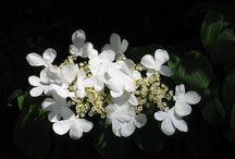 Blumen und Gärten