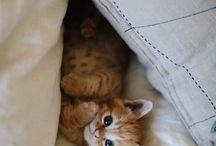 Kissat