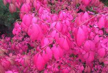 Rośliny / Kwiaty