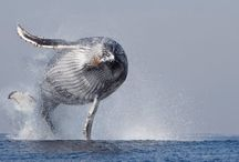 Balene e simili