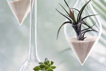 Terrariums / by Nerice Lochansky