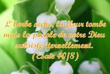 Citations bibliques