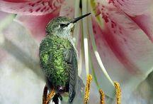 DIVINE HUMMINGBIRD collection