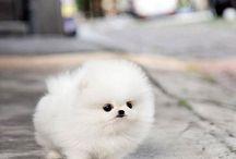 Cute fluffy animals / Depicting innocence