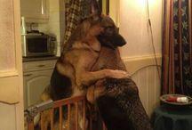 I so love dogs