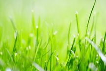 Lawn and soil care tips! / Caring for you lawn involves feeding both the grass and the soil. Watch for some helpful tips for keeping your lawn green and healthy here!  / by Jonathan Green