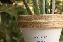 Macetas - pots for plants