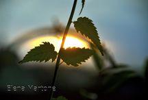 Tramonti / Il tramonto è il momento più bello sul finire del giorno.Guardare, osservare, fotografare il tramonto del sole, sul mare o dietro una collina è qualcosa di stupendo. Vivere istante dopo istante la varietà di luci e di colori del mondo circostante fino ad arrivare al crepuscolo.Il sole tramonta e  colora il cielo di rosso, di arancione, di giallo....ogni colore ti porta una sensazione, un'emozione, un fascino diverso. E il sole diventa incandescente e non lo si vede più.