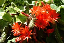 Flowers / Fioriture, colori...........giardini.
