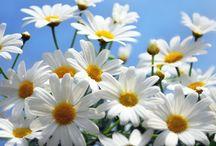 Die süße Blume