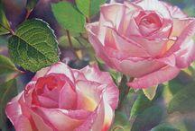 Rosas rosas y mas rosas / by Silvia Martinez