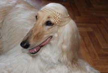 Babble I Of Broor (Фея) / Моя Принцесса