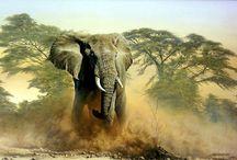 Animal painting / Animal painting and drawing, wildlife, hunting, birds