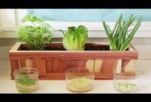 Home -Gardening
