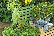 for my garden / by janella wiener