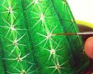 Kamienky - kaktusy