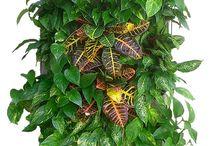 Jardinera Vertical Vertiflor / Tu jardín vertical y huerto urbano con la jardinera Vertiflor. Una jardinera ecológica y fabricada con material reciclado.