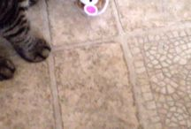 Influenster Temptations Cat vs Mouse / Cute new toy for your favorite feline