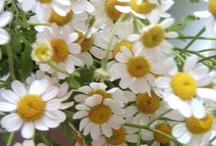 Daisy the friendly flower