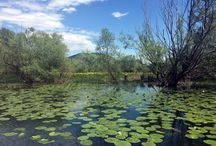 Skadar Lake / Skadar Lake National Park is the largest lake in the Balkans covering 550km2.  The wetlands are home to over 250 bird species and the lake is scattered with picturesque villages and islands.