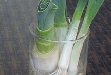 orto in vaso