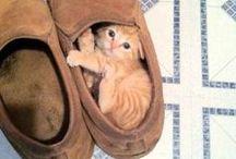 awwwwwwwwwwwwwwwwwwwwwwwwwwwwwwwwwwwwwwww / the MOST adorable kitties EVER