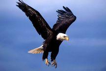 Eagles / Eagles are a symbol of inspiration