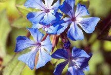 Pflanzen im Garten und der Natur / Wir stellen die bekanntesten Pflanzen der Natur und in den Gärten vor und zeigen Ihnen die schönsten Fotos von Gartenpflanzen.