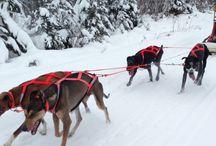Dog Sled Rides and Tours | Dog Sledding
