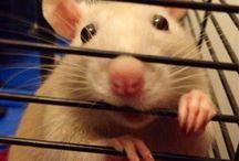 Mouse my love / <3 / by Patrizia Barattero