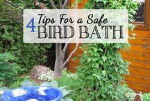 Bird Baths / by Holly Doughty
