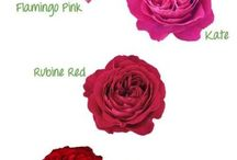 flower info