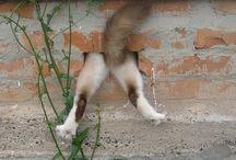 Just Cats / The Cat Kingdom