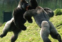 macaco selvagem