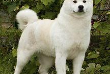 2105 Dog breed calendars