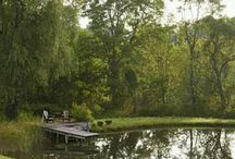 VZ- rybník