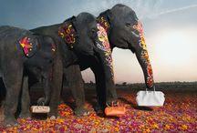 hermes elephants