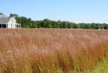 Just Grasses Native Seed Mixes