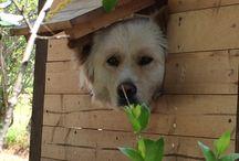 My dog / 我が家のMix犬「まる」の日常