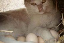 gatto ci cova