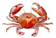 Crab drawings
