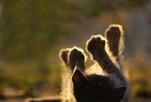playful animals