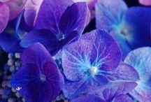 COLOR: Purple * Turquoise