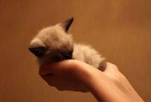 cute is an understatement  / by Salima Alaswad